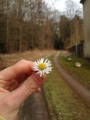La flor pato – #AuPair confundida xD – Tag 132! ^^  [Ajiru inDeutschland]